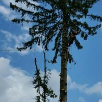 spruce-speed-line